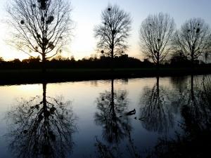 Thames evening